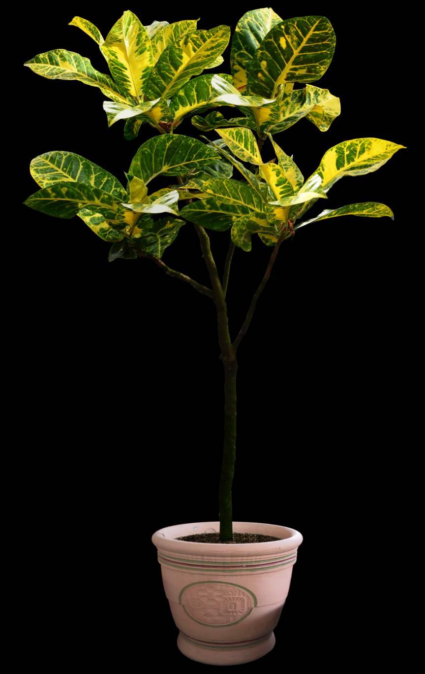 پرسوناژ گلدان