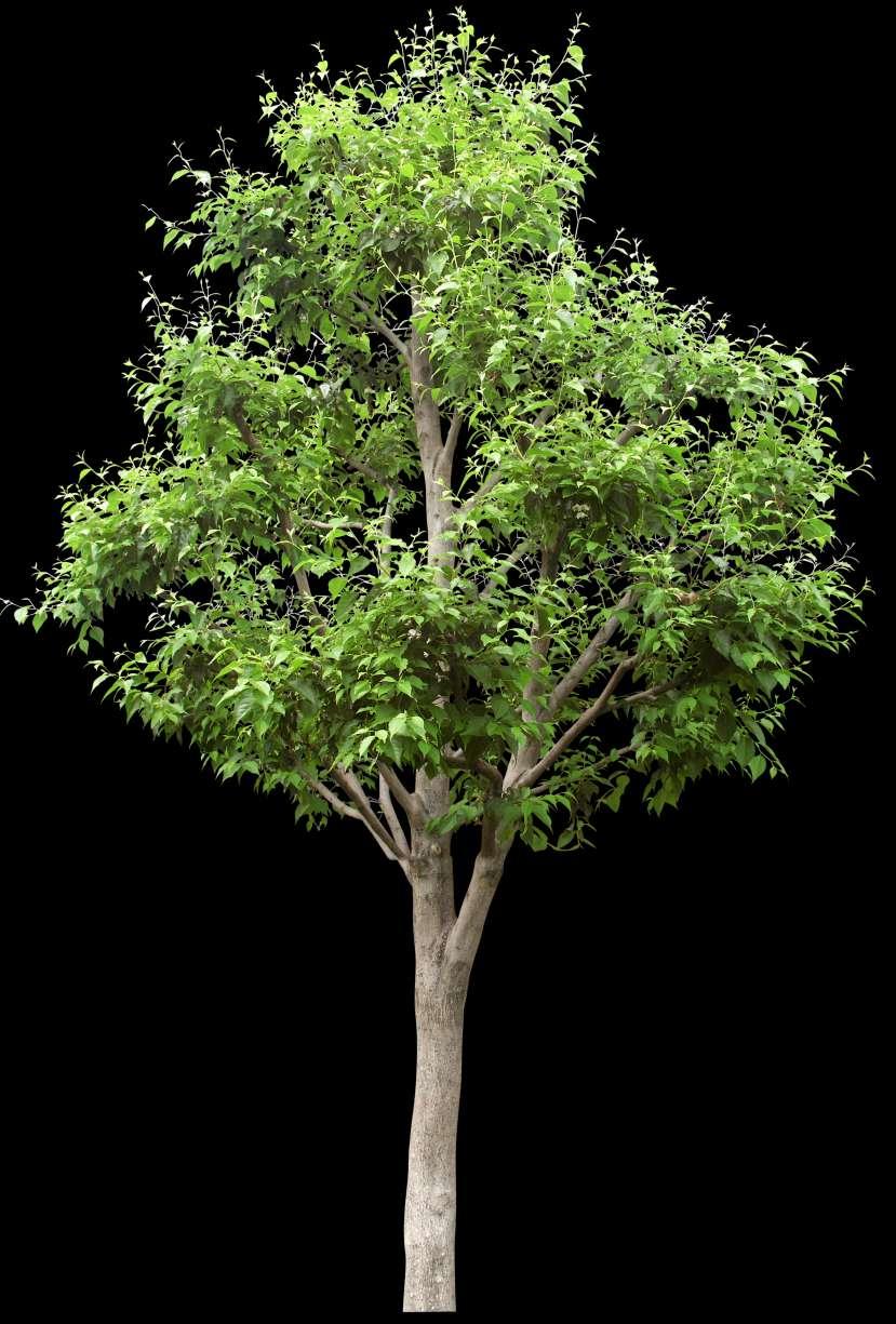 تصویر برش خورده درخت