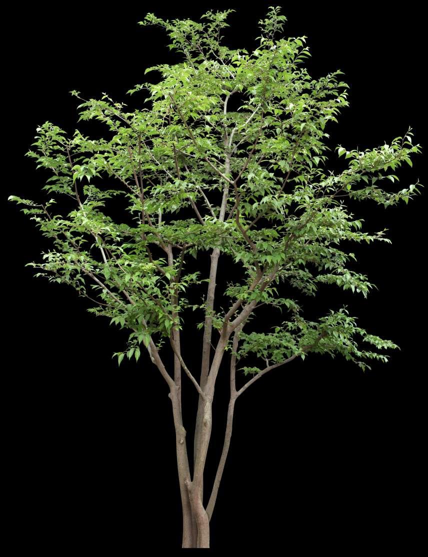 تکسچر درخت
