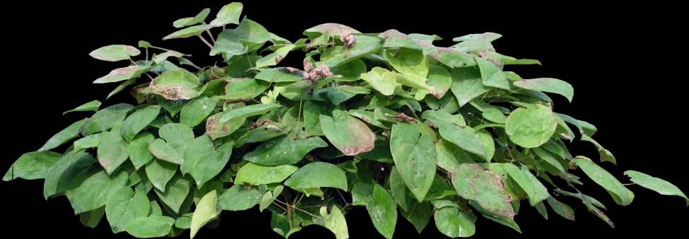 پست پروداکشن درخت