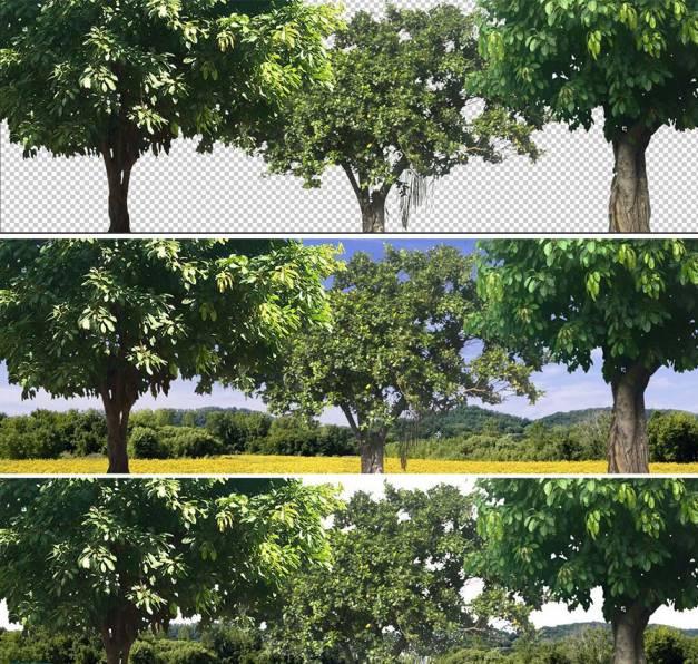 تصویر زمینه درخت