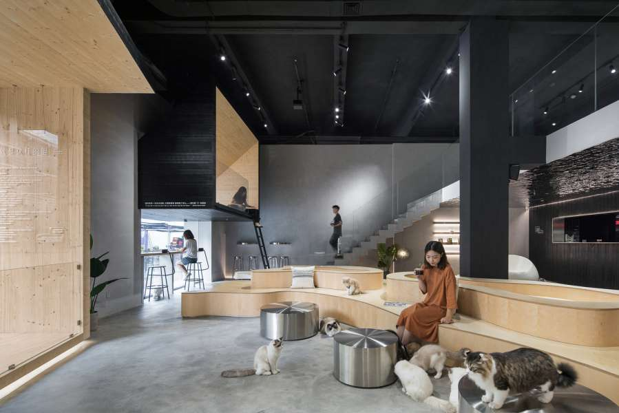 طراحی رستوران برای علاقمندان به گربه