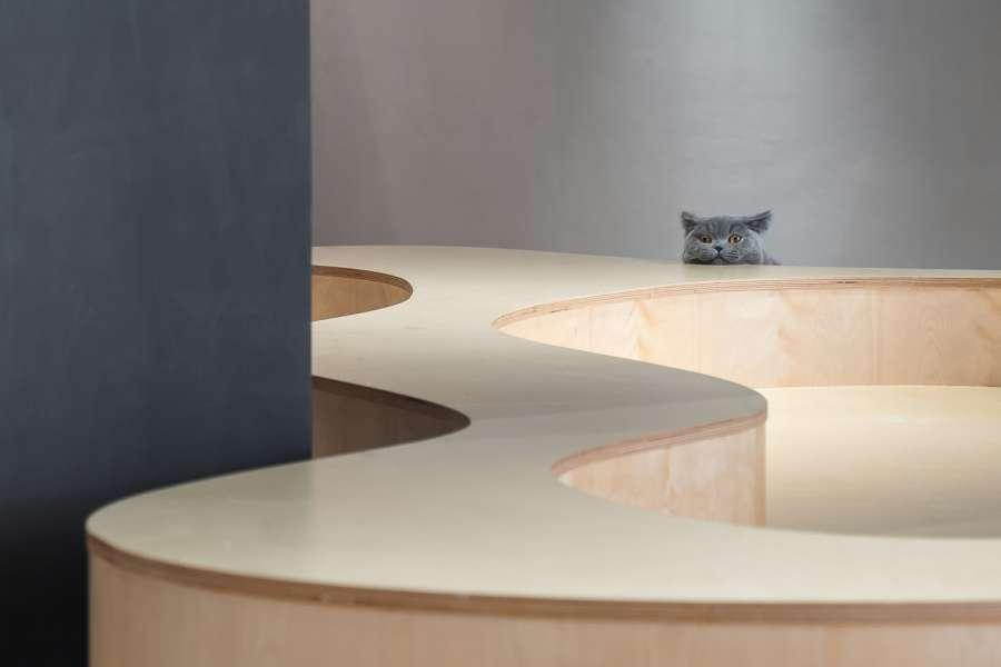 طراحی و دکور رستوران برای علاقه مندان گربه گربه