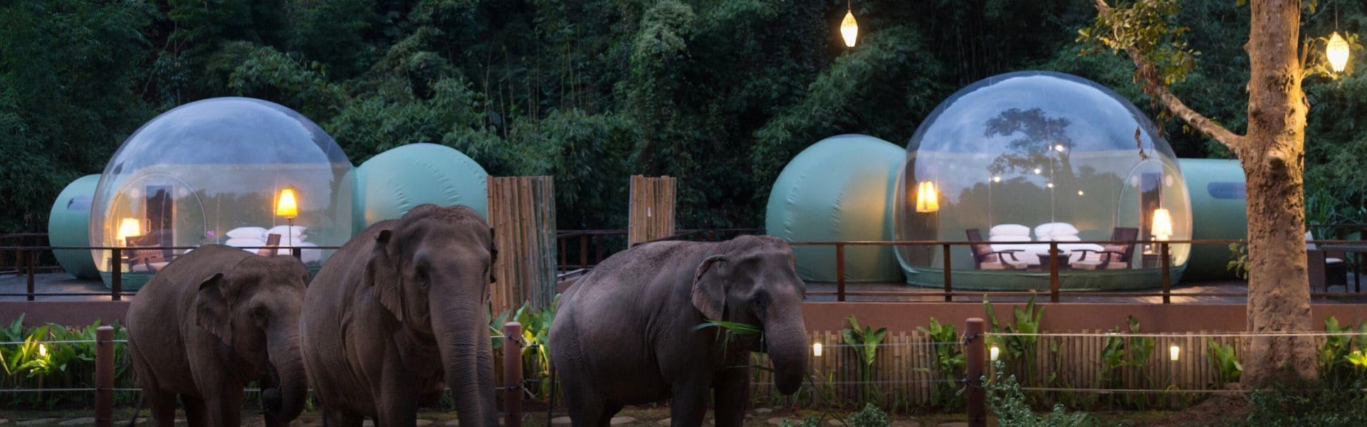 طراحی اقامتگاه جنگلی با حباب های شفاف
