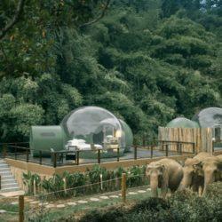 طراحی اقامتگاه جنگلی در تایلند