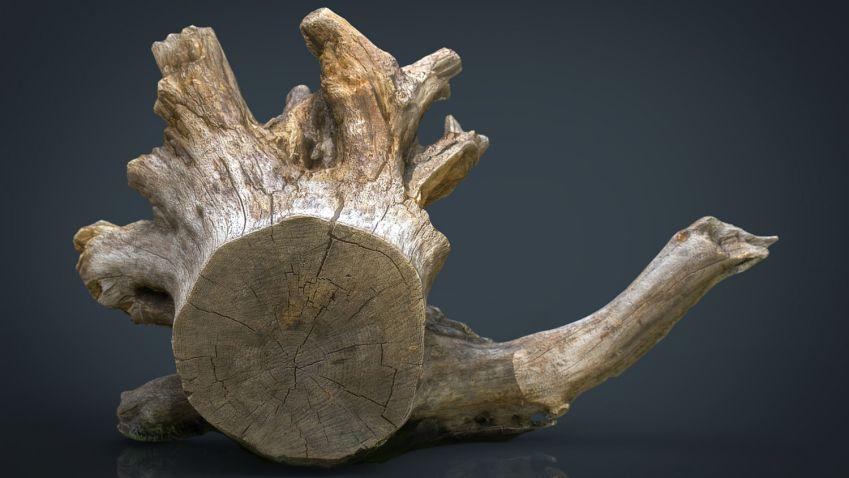 دانلود مدل سه بعدی جنگل