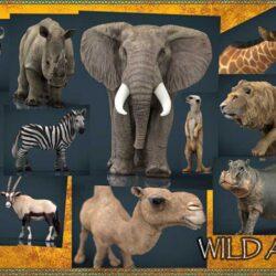 دانلود مدل سه بعدی حیوانات آفریقایی