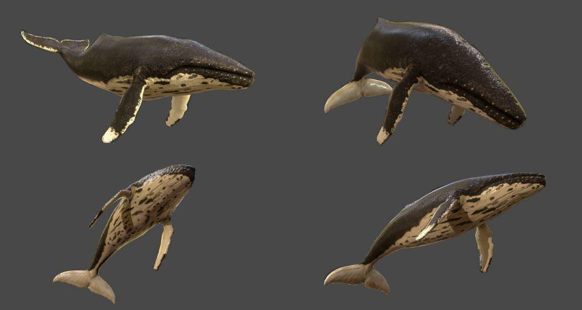 دانلود مدل سه بعدی حیوانات دریایی