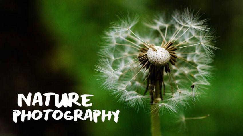آموزش عکاسی طبیعت