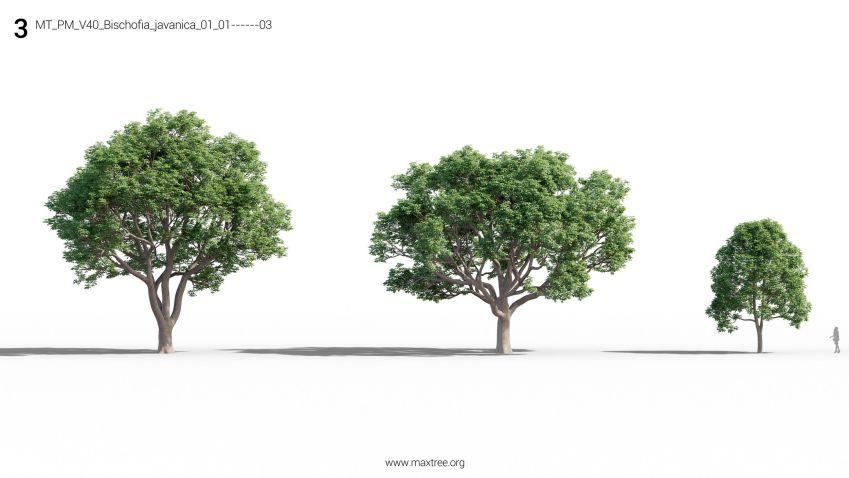 دانلود آبجکت درخت و بوته