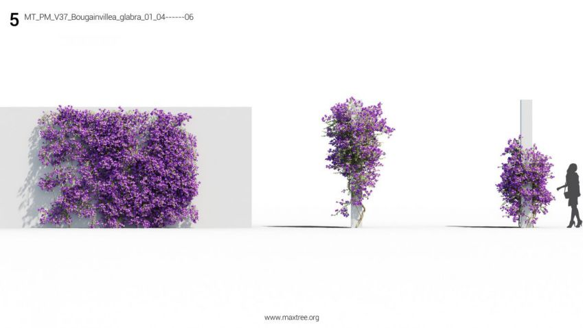 مدل سه بعدی گل و گیاه زینتی