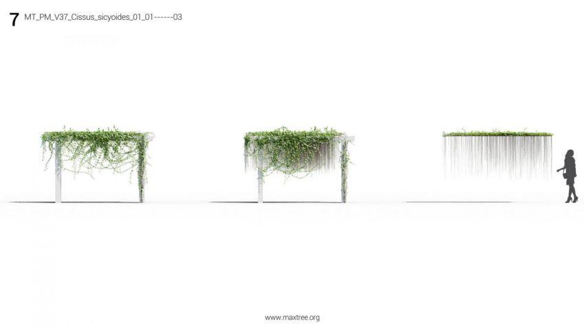 آبجکت گیاهان باغچه ایی و پرچینی