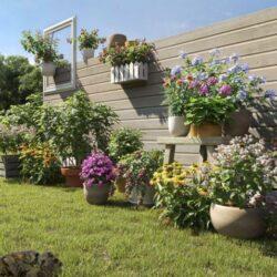 دانلود آبجکت گل و گیاه گلدانی