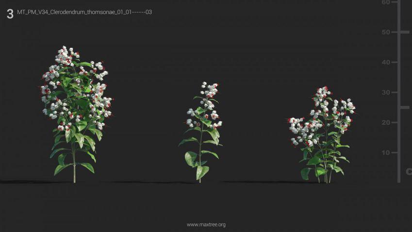 آبجکت گل و گیاه گلدانی