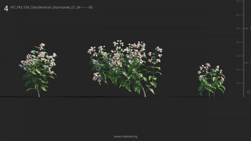 دانلود آبجکت گل و بوته