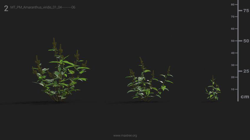 مدل سه بعدی گل