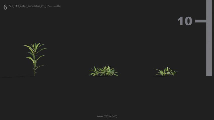 مدل سه بعدی گل و بوته