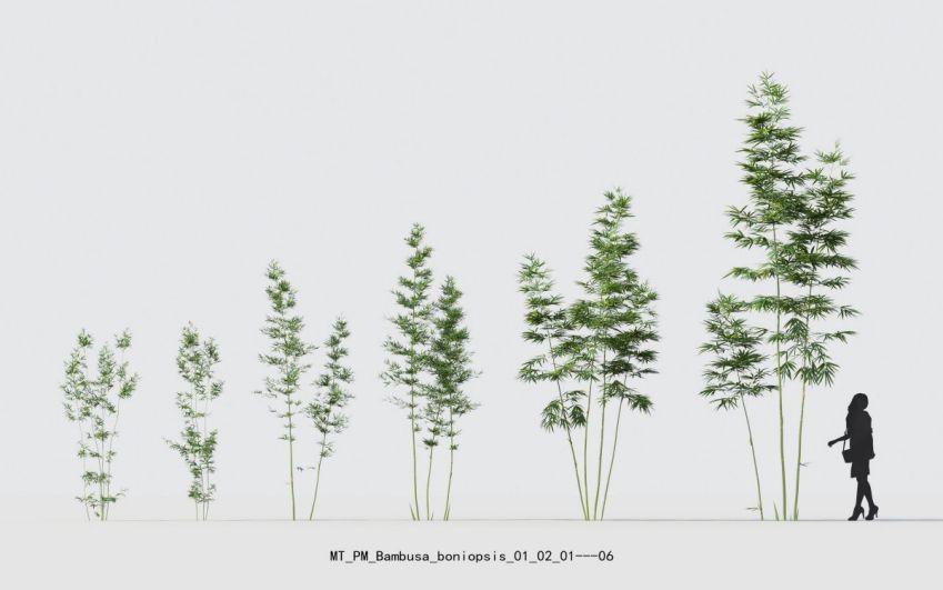 مدل سه بعدی گل و گیاهان گلدانی