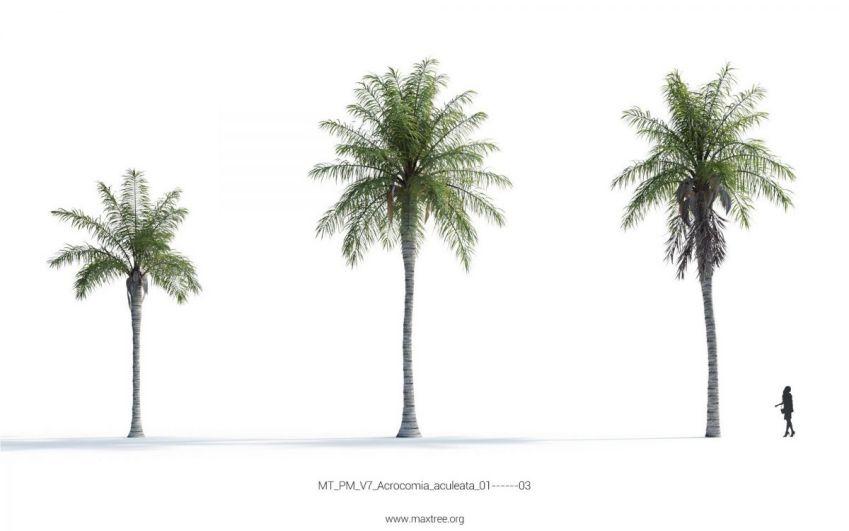 دانلود مدل سه بعدی درخت نخل