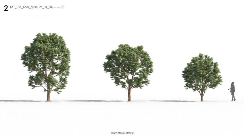دانلود مدل سه بعدی درخت و بوته