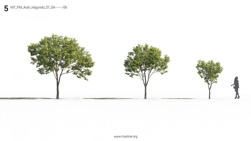 آبحکت درخت