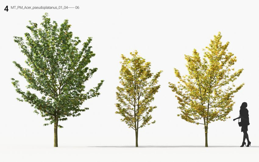 مدل سه بعدی درخت تزئینی