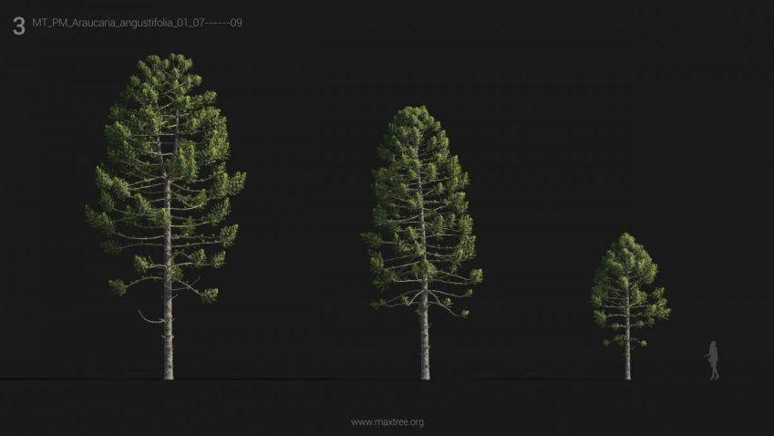 دانلود مدل سه بعدی درخت و درختچه