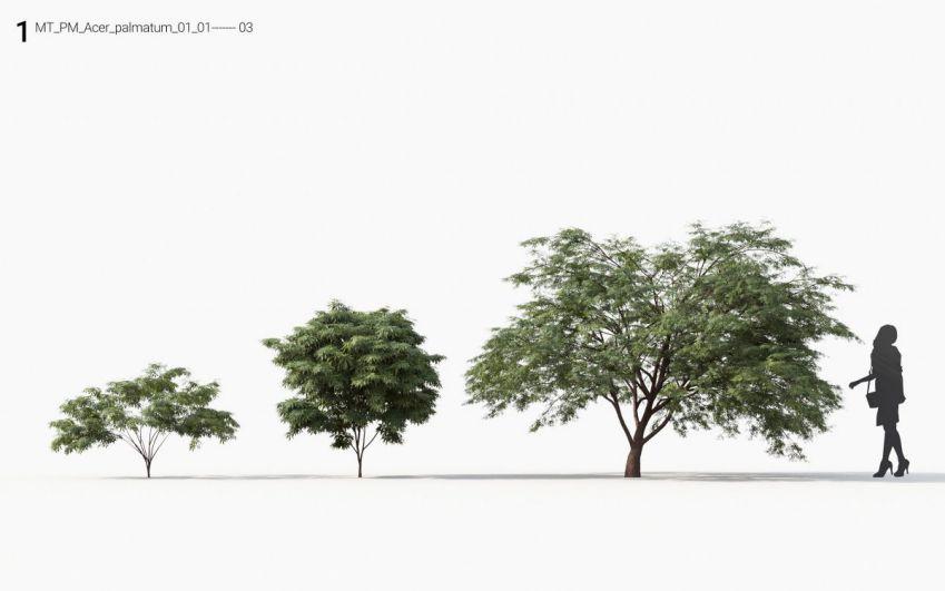 دانلود آبجکت درخت و درختچه