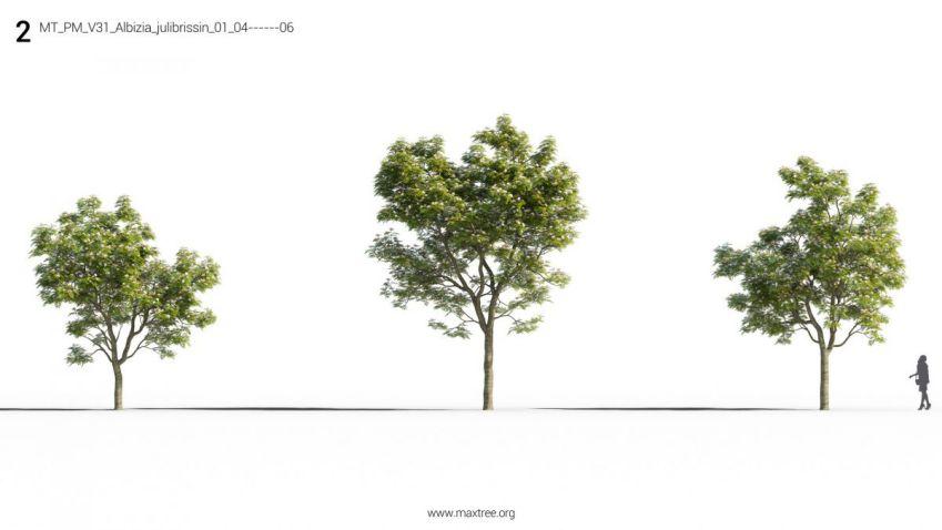 آبجکت درخت زینتی