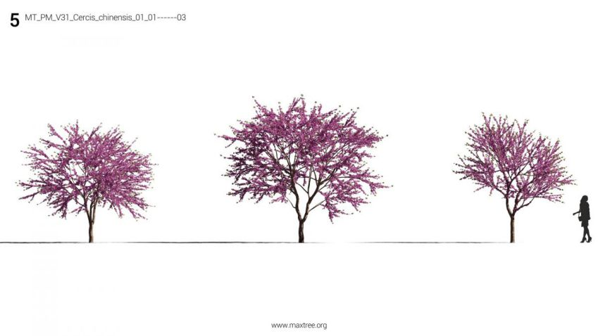 مدل سه بعدی درخت