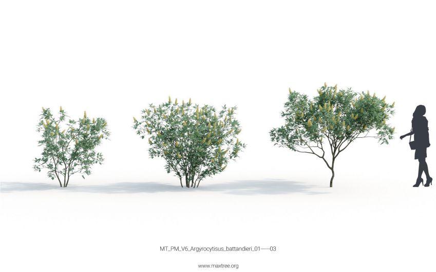 دانلود مدل سه بعدی درختان