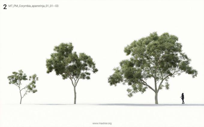دانلود آبجکت درخت و چمن