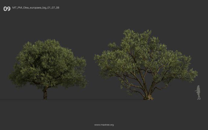 مدل سه بعدی درخت از Maxtree
