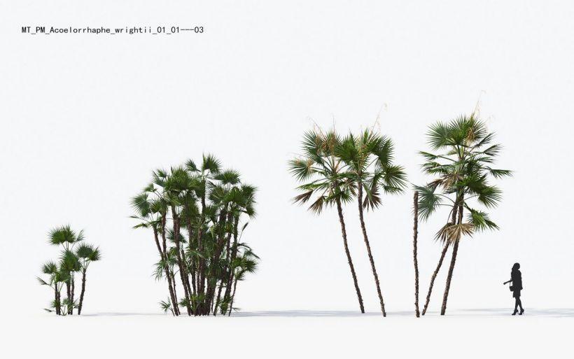 دانلود آبجکت درخت گرمسیری