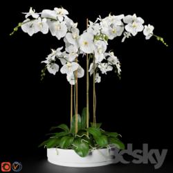دانلود 80 آبجکت گل و گلدان از Pro 3DSky – کالکشن 1