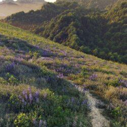 دانلود 72 آبجکت گل و بوته از Maxtree – کالکشن 54