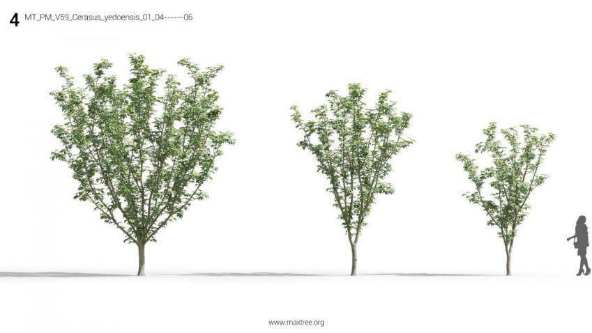 دانلود 69 آبجکت گل و گیاه