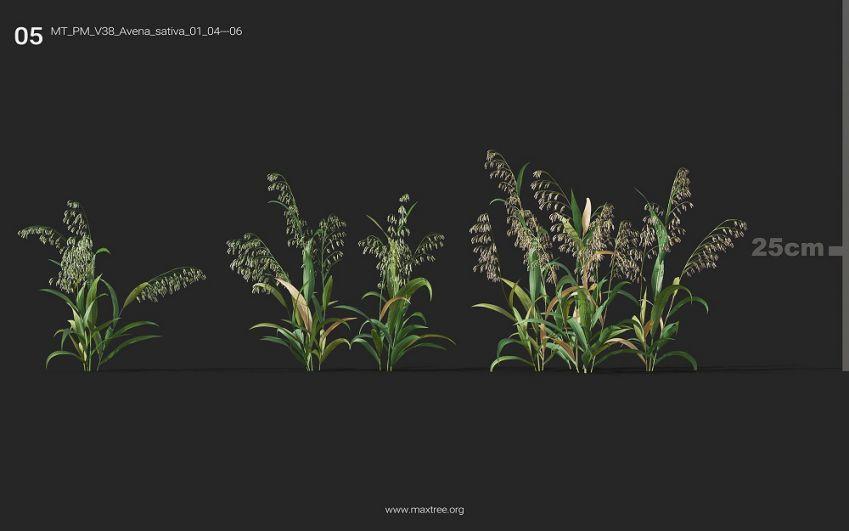 دانلود 252 آبجکت گل و گیاه