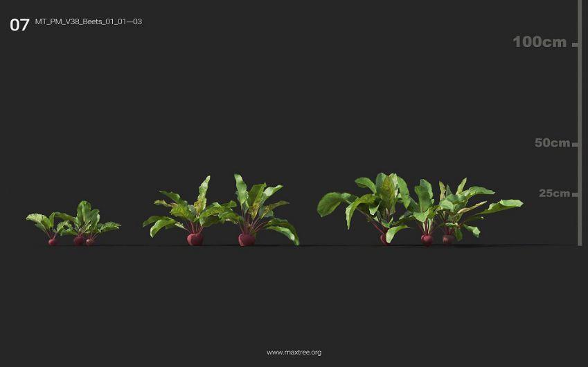 مدل سه بعدی گل و گیاه