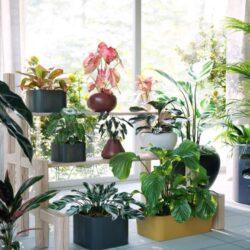 دانلود 72 آبجکت گل و گیاه از Maxtree – کالکشن 62