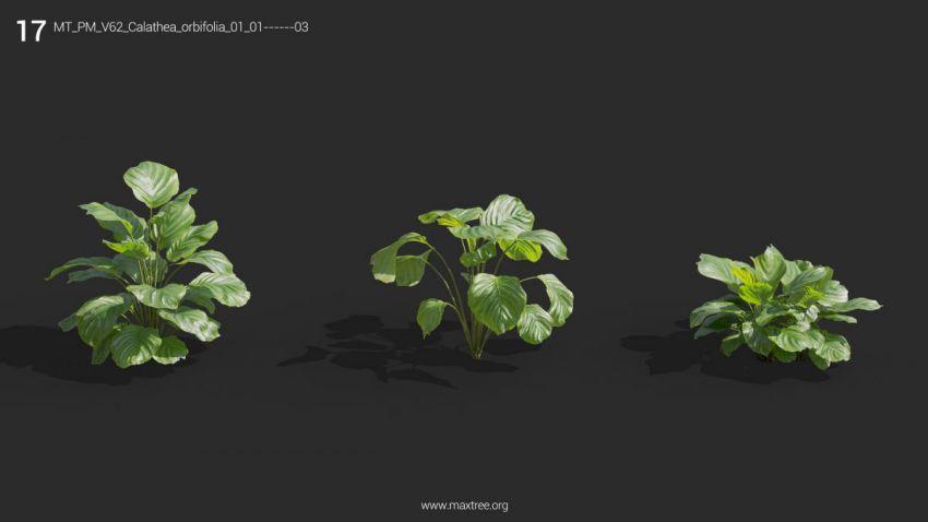 مجموعه مدل سه بعدی گل و گیاه