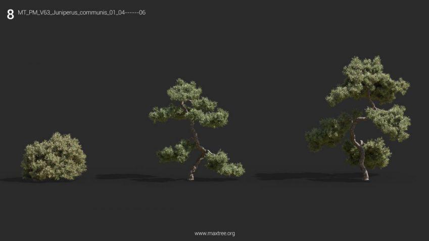 دانلود 72 مدل سه بعدی گل و گیاه