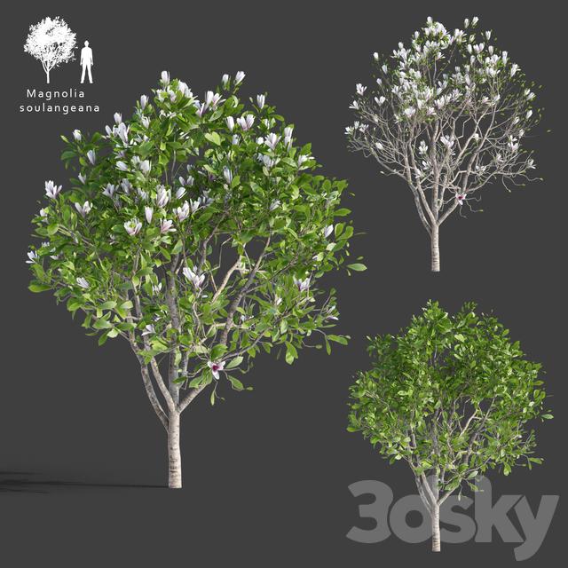 دانلود 53 آبجکت درخت از Pro 3DSk