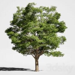 دانلود 53 آبجکت درخت از Pro 3DSky – کالکشن 2