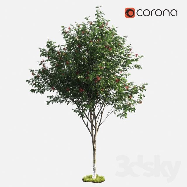 دانلود 60 آبجکت درخت از Pro 3DSk