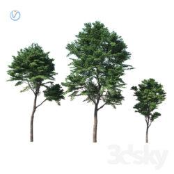دانلود 60 آبجکت درخت از Pro 3DSky – کالکشن 1