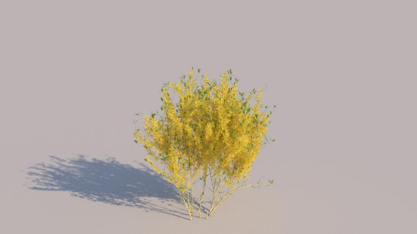 مدل سه بعدی بوته