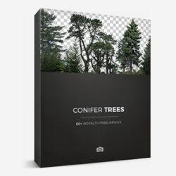 دانلود پرسوناژ درختان سوزنی برگ با فرمت PNG