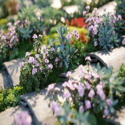 دانلود مدل سه بعدی گل و چمن از Maxtree – کالکشن 42