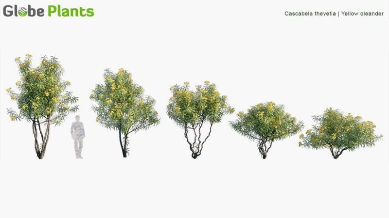 مدل سه بعدی گیاهان باغ